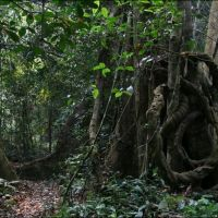048-Лаос-национальный-парк-Luang-Namtha