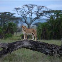 002-Долина-реки-Серонера,-Серенгети-Танзания-декабрь-2012