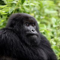 013-Park-De-Volcanoes-Руанда-декабрь-2012
