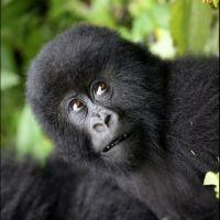 014-Park-De-Volcanoes-Руанда-декабрь-2012