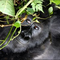 015-Park-De-Volcanoes-Руанда-декабрь-2012