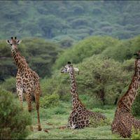 031-Серенгети-Танзания-Декабрь-2012