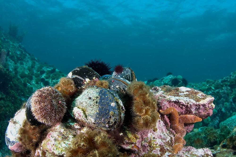 Фото подводных обитателей японского моря